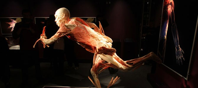Alla scoperta del corpo umano