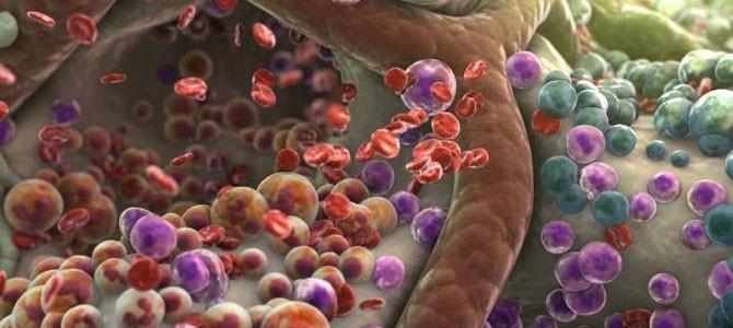 Tutto sulle cellule del corpo umano